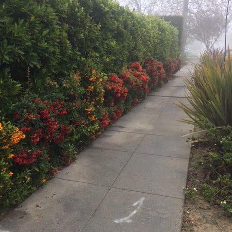 Gratitude Garden