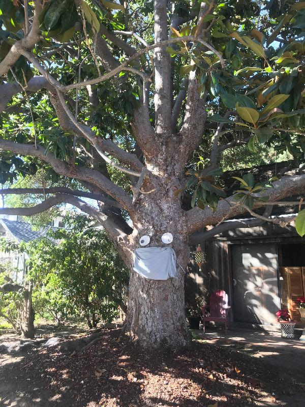 Hidden fun tree